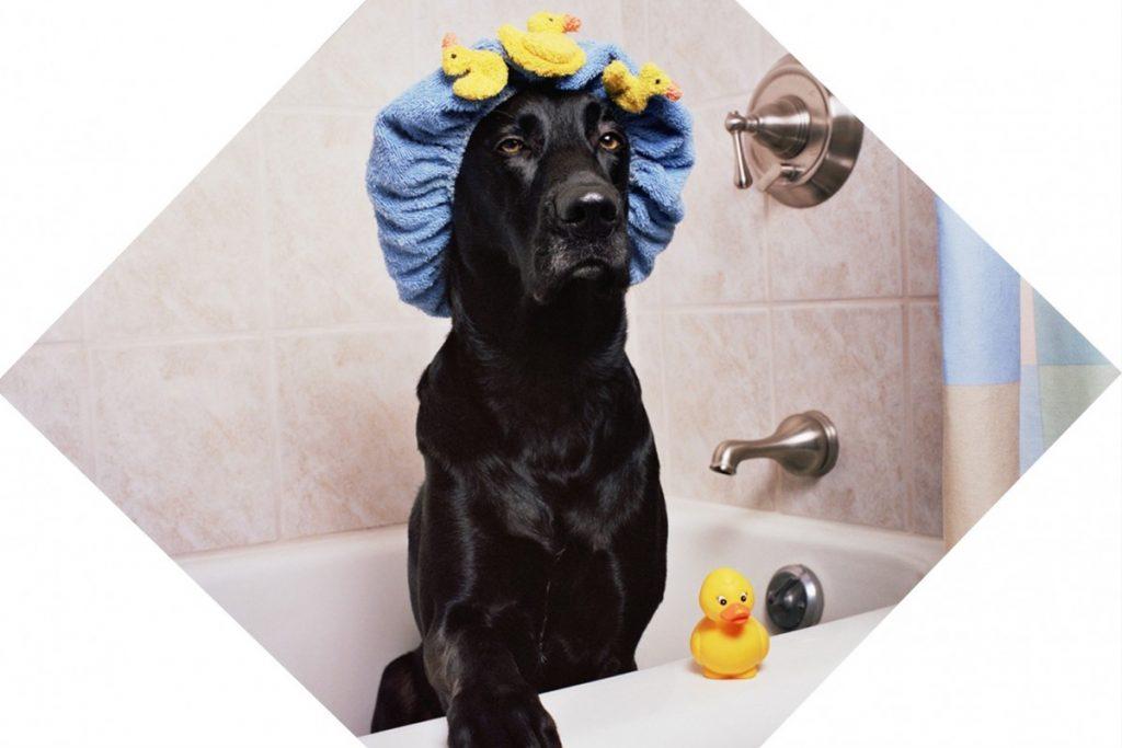 OTITIS en los perros: Qué la Causa, Cómo Evitarla y Cómo