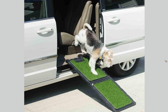 Mejores rampas para perros