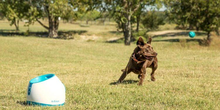 Mejores lanzadores de pelotas para perros