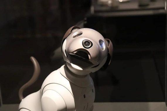 Mejores juguetes interactivos para perros