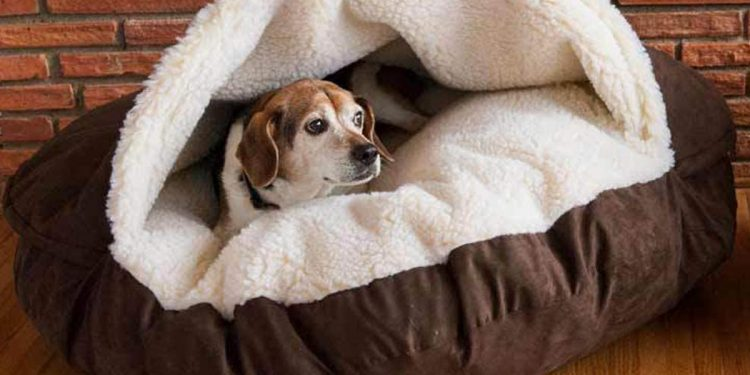 Mejores camas iglú para perros