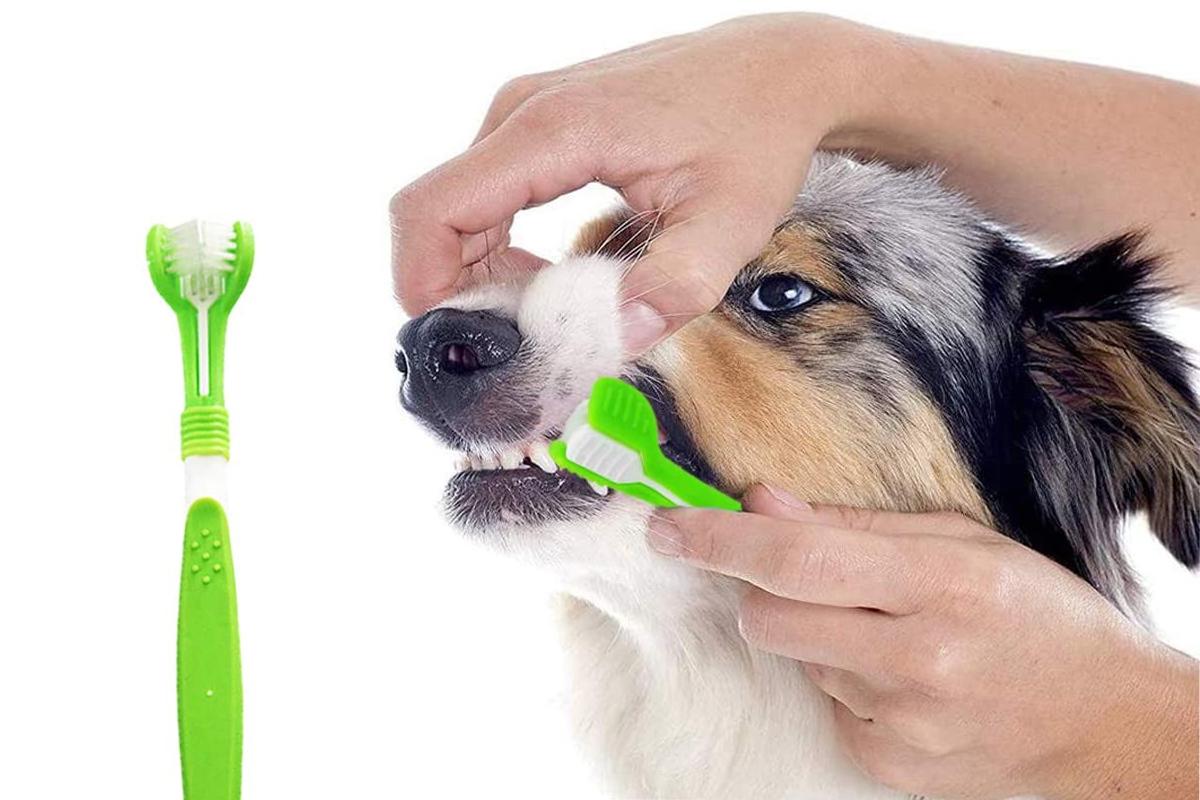 Mejores cepillos de dientes para perros y cómo utilizarlos