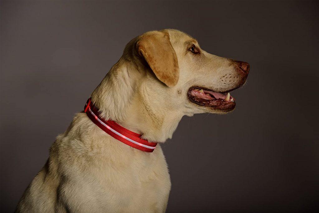Los mejores collares luminosos para tu perro