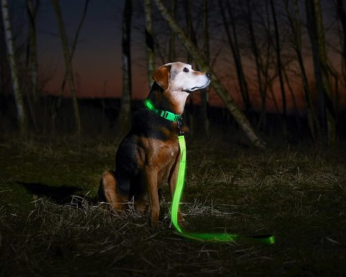Los mejores collares luminosos para tu perro que brillan en la oscuiridad