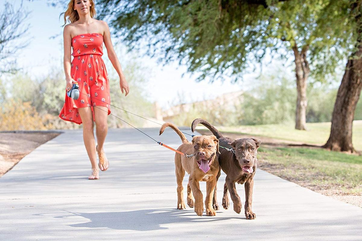 Mejores correas extensibles para perros