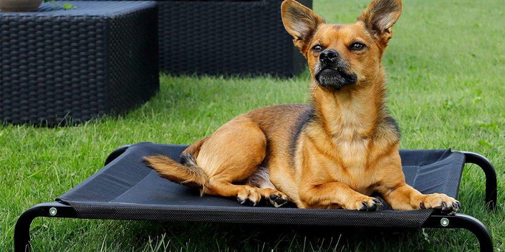 Las mejores camas elevadas para perros