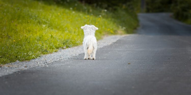 Qué hacer cuando te encuentras con un perro abandonado
