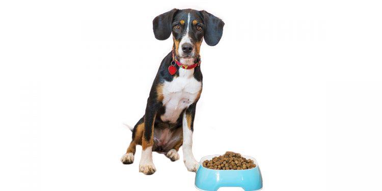 Mejores piensos para perros con displasia