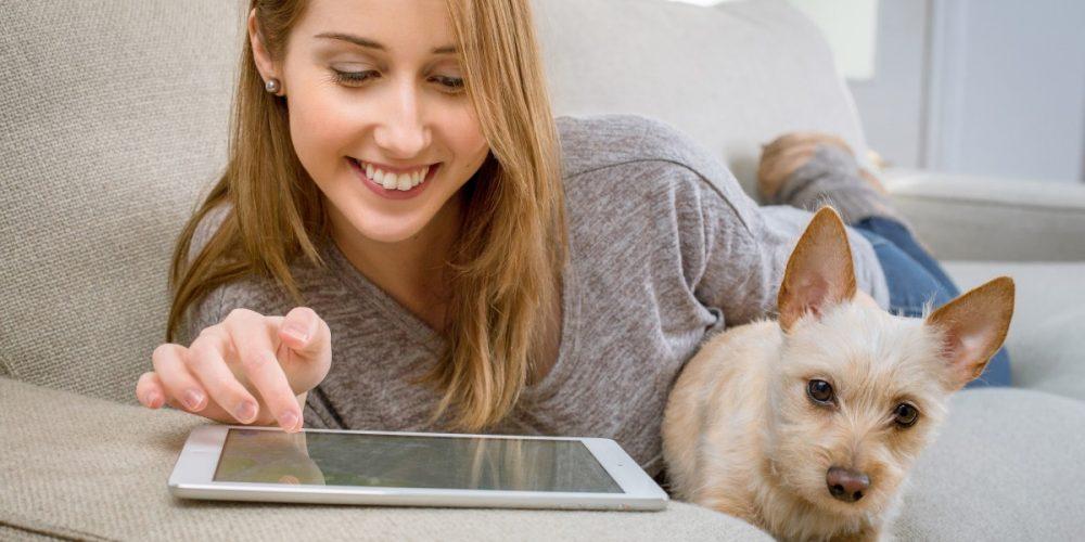 Top 5 seguros online económicos para perros
