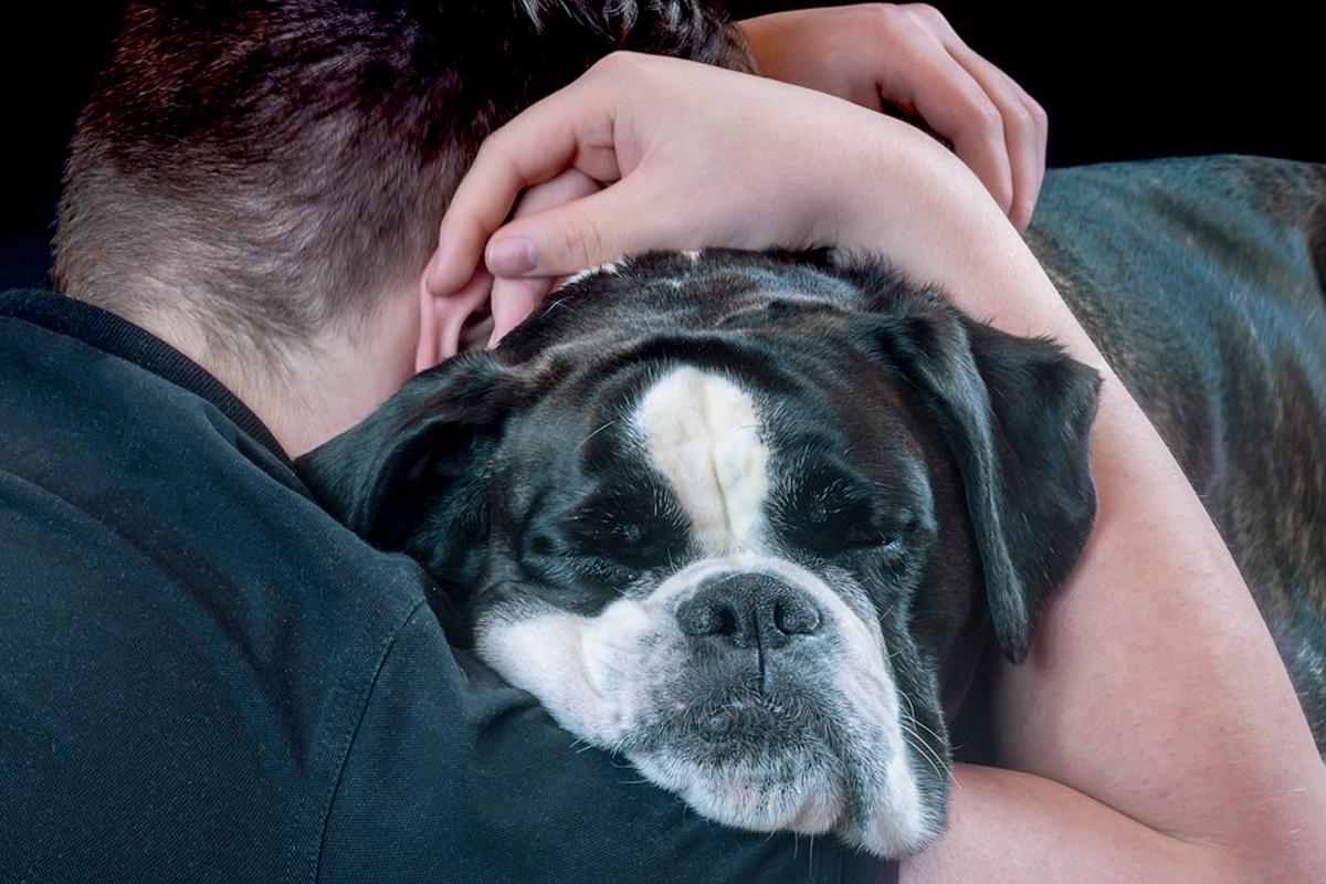 Cómo quitar el miedo a un perro maltratado