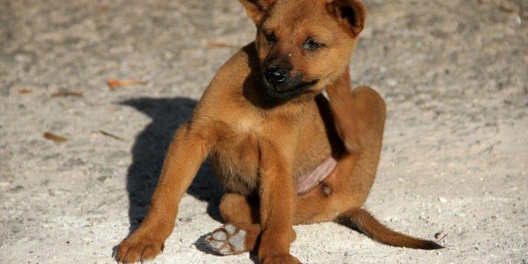 Mejores pipetas para perros. Comparativa de marcas