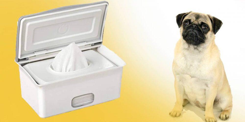 Las mejores toallitas higiénicas para perros