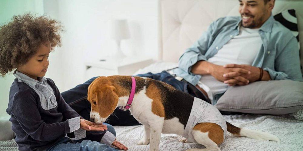 Los mejores pañales para tu perra hembra