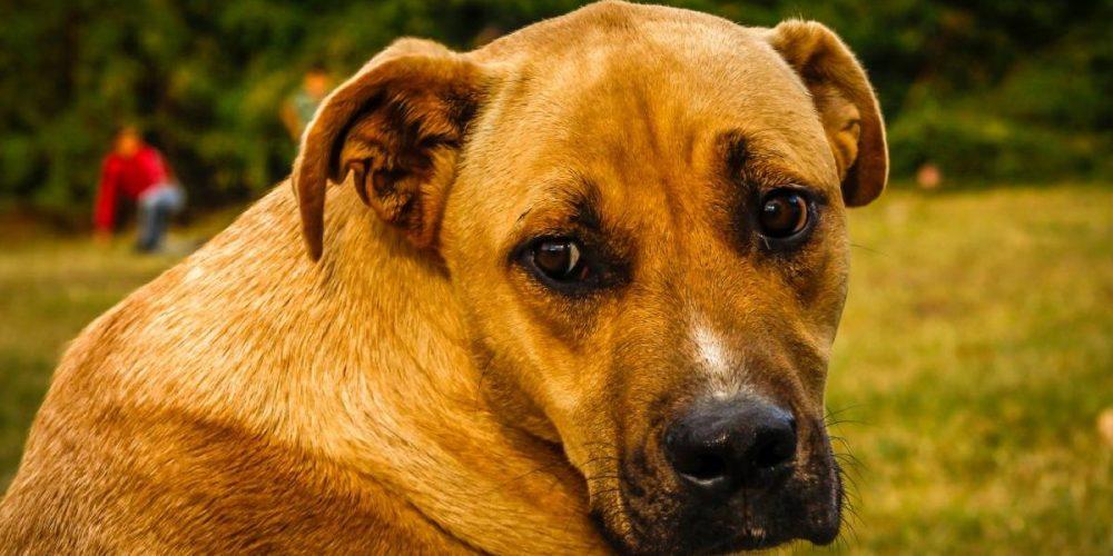 Alimentación, dietas y mejores piensos para perros con estreñimiento