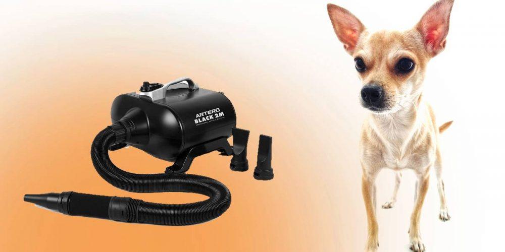 Mejores secadores de pelo profesionales para perros