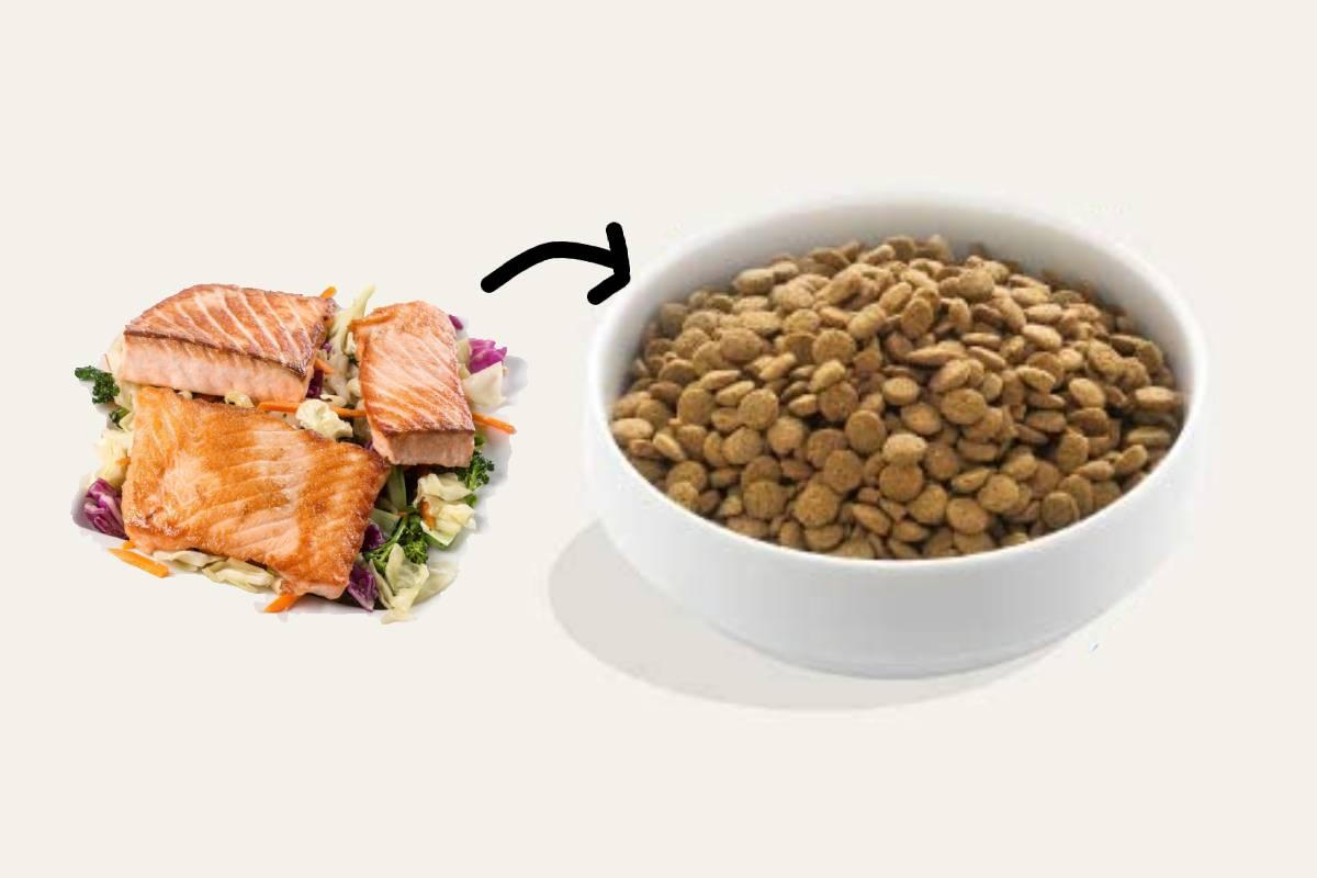 Mejores piensos con salmón para perros