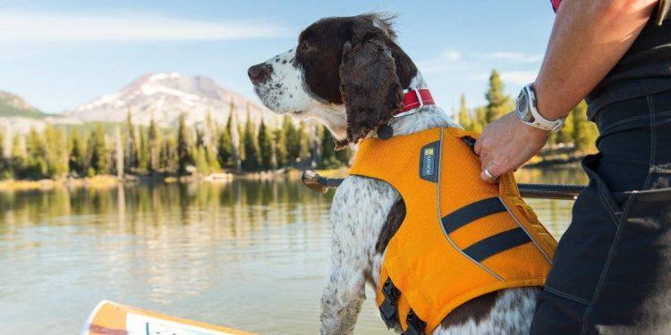 Mejores chalecos salvavidas para perros