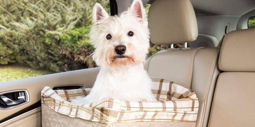 Top mejores asientos de coche elevados para perros