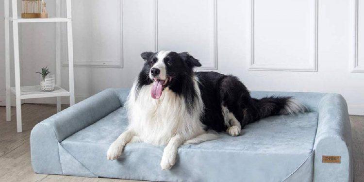 Top 10 colchones ortopédicos y viscoelásticos para perros
