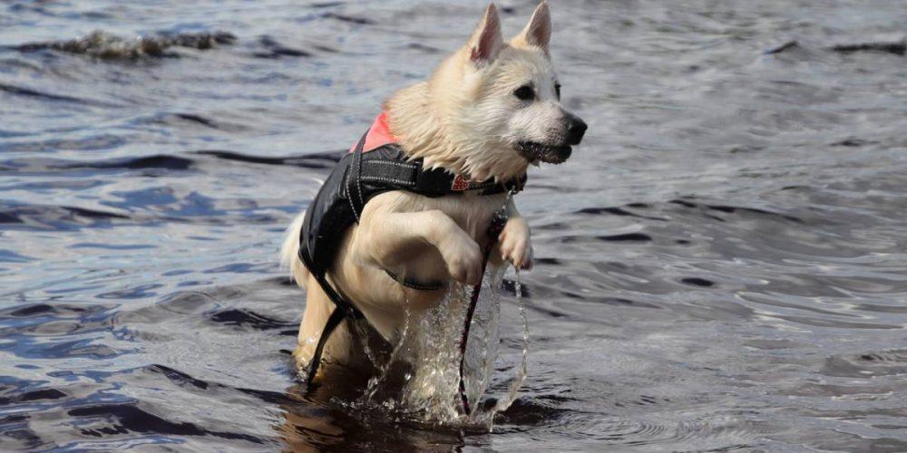 Top 7 chalecos salvavidas para perros de raza pequeña