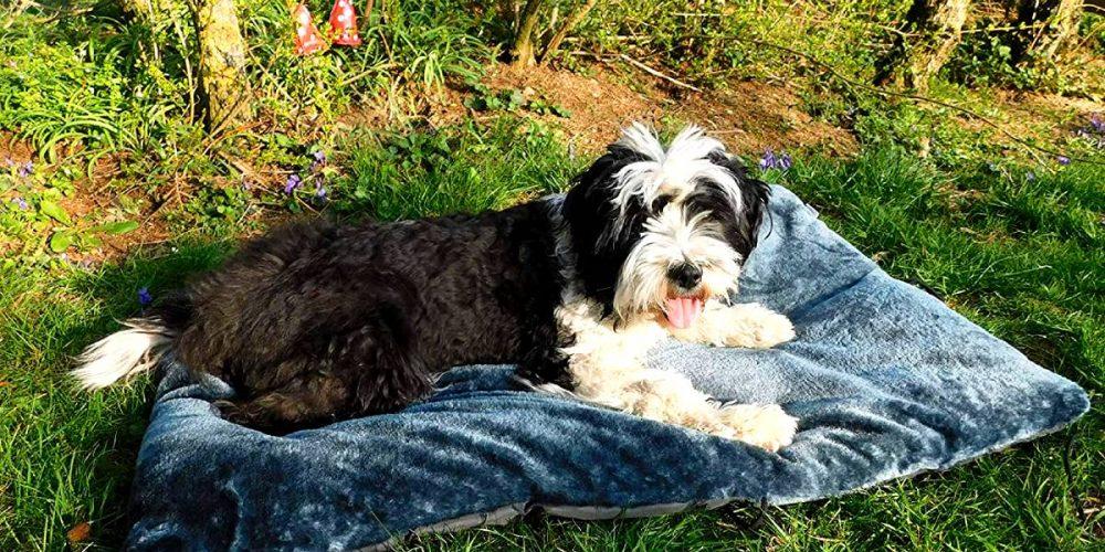 Mejores camas de viaje para perros