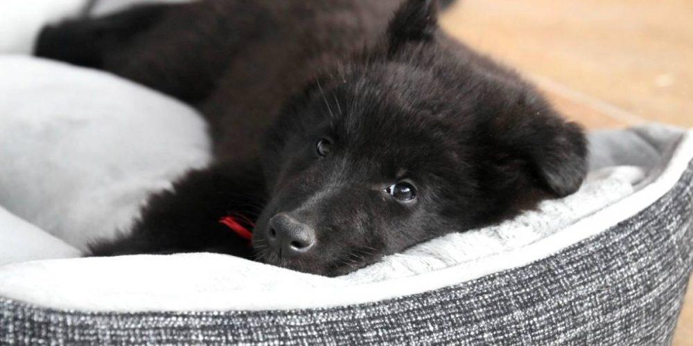 Top 10 mejores camas relajantes y antiestrés para perros