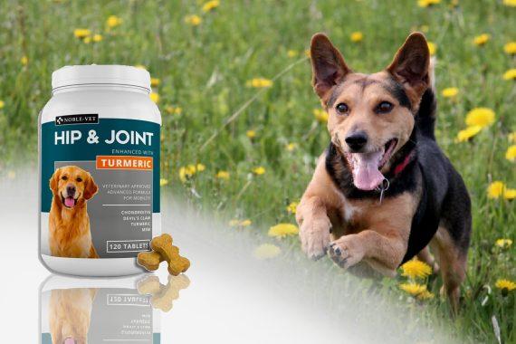 Mejores suplementos para la artritis y las articulaciones de tu perro