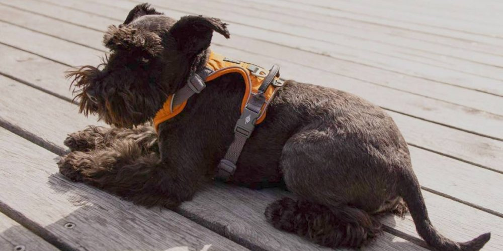 Top 7 arneses antitirones para perros: mejores 2021