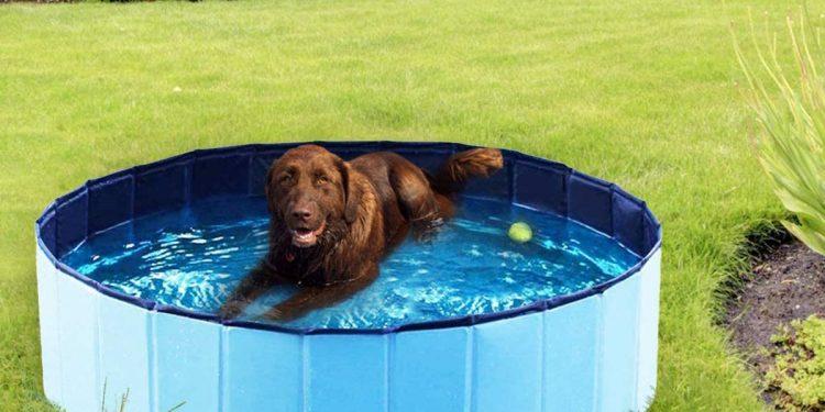 Mejores piscinas plegables y de viaje para perros