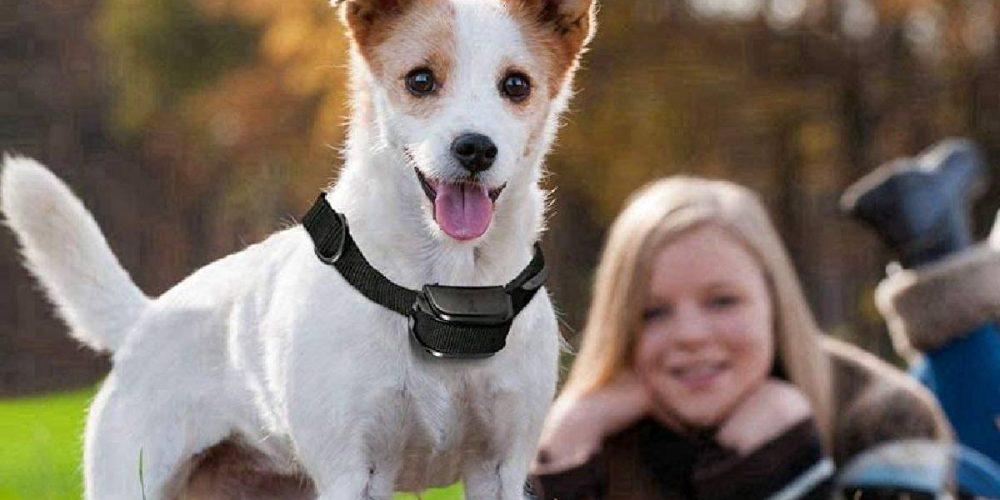 Top 5 collares de adiestramiento para perros sin descarga eléctrica