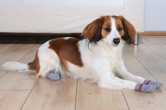 Top 7 calcetines antideslizantes para perros