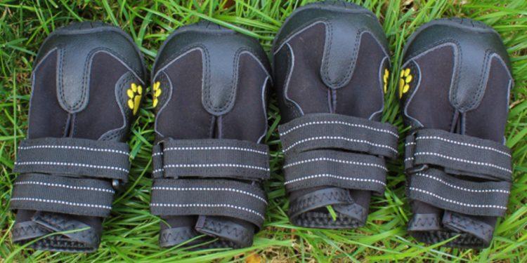 Mejores zapatillas para perros. Guía y mejores marcas