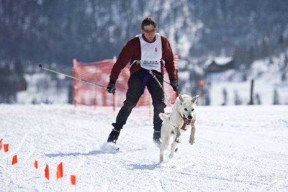 El Skijoring, tu perro y tú. Todo lo que necesitas para lanzarte a la aventura