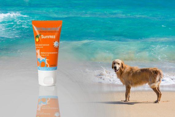 Crema solar para perros. Cuál elegir y cómo utilizarla