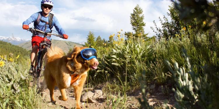 Gafas de sol para perros. Cómo elegir las mejores y dónde comprarlas