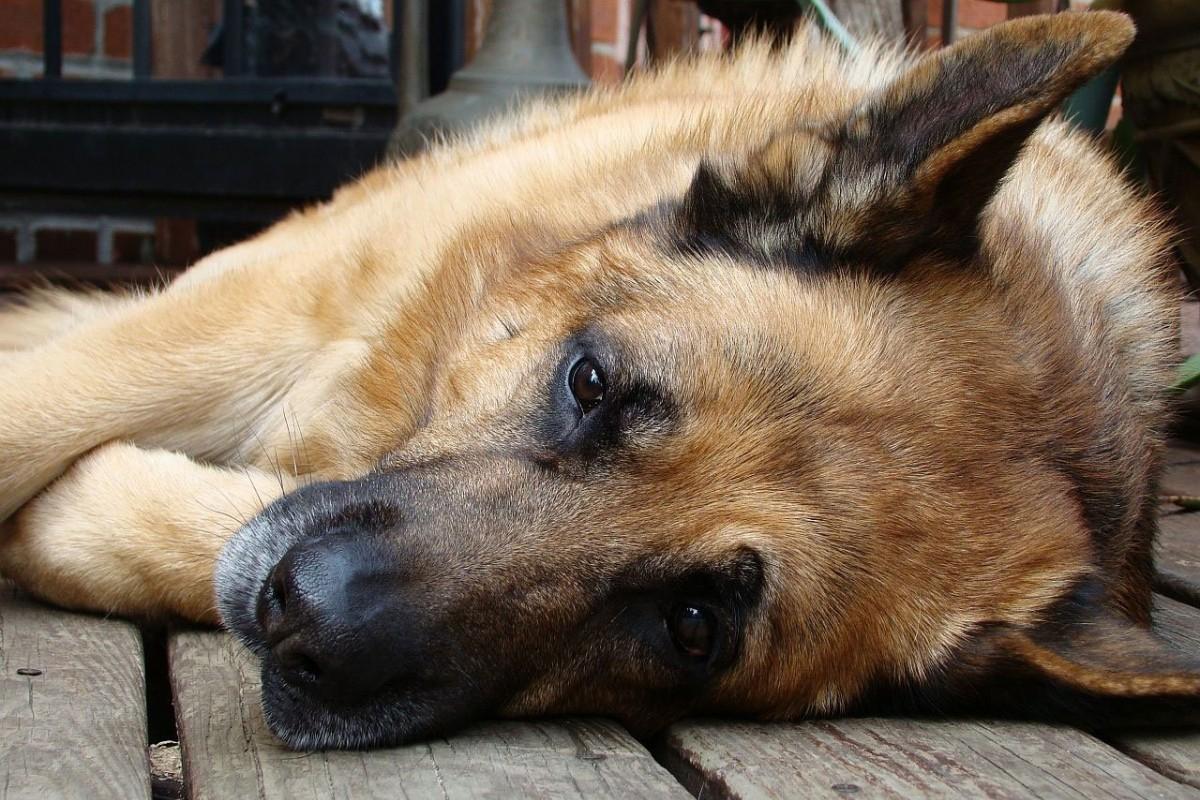 La epilepsia en los perros. Síntomas, cómo afrontarla y tratamiento